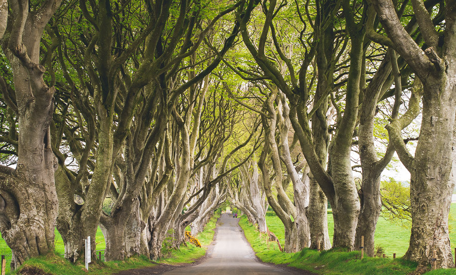 The famous Dark Hedges © | Valerie Hinojosa/ Flickr