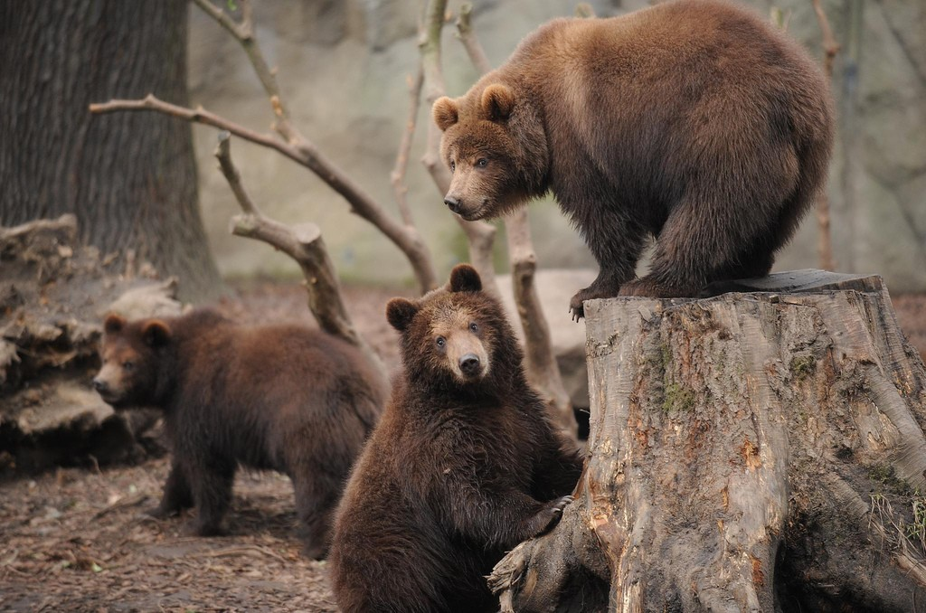 Bears at the zoo | © Ralf Heid / Flickr