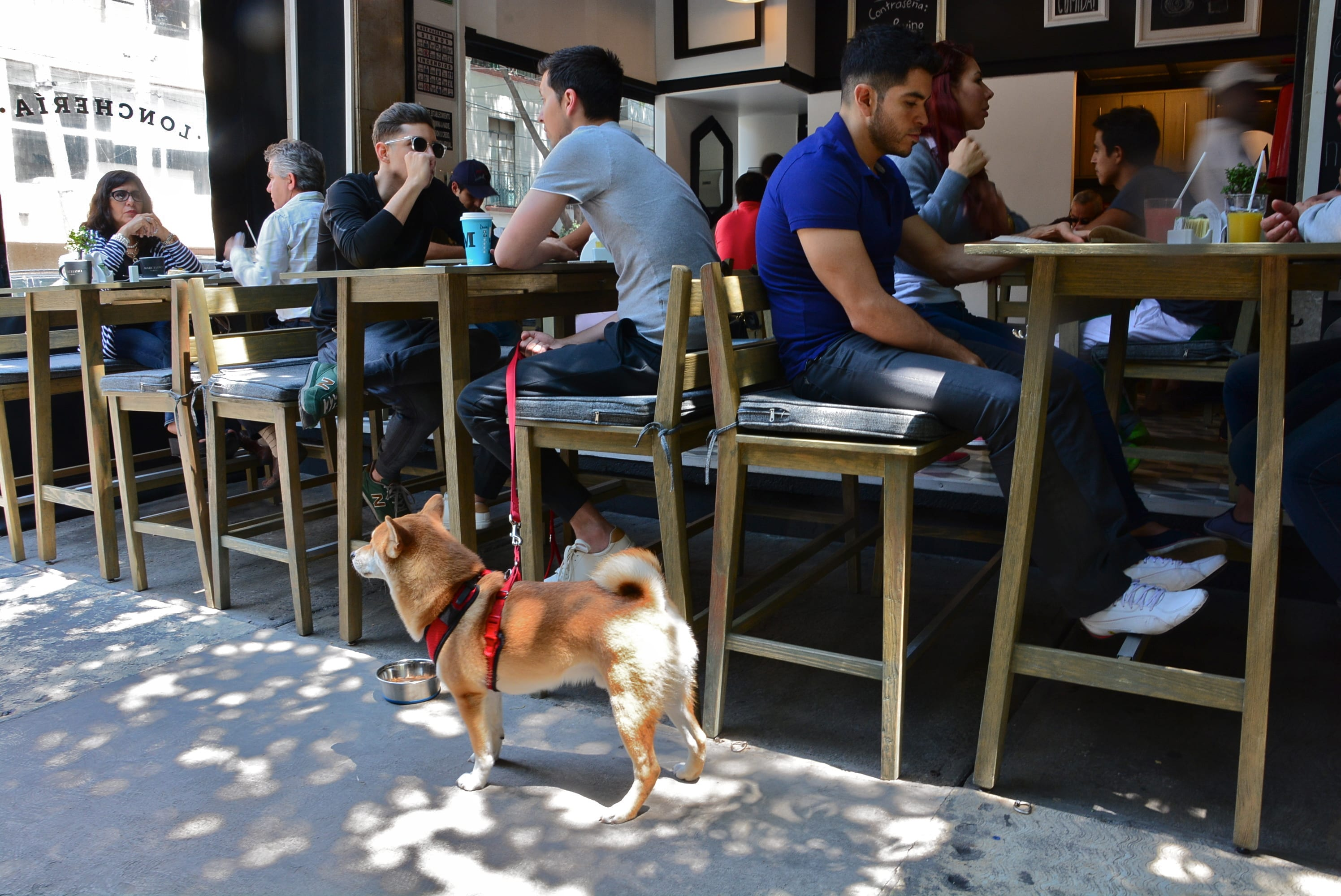 How could you not love a place with shiba inu sighting potential? | © Alejandro/Flickr