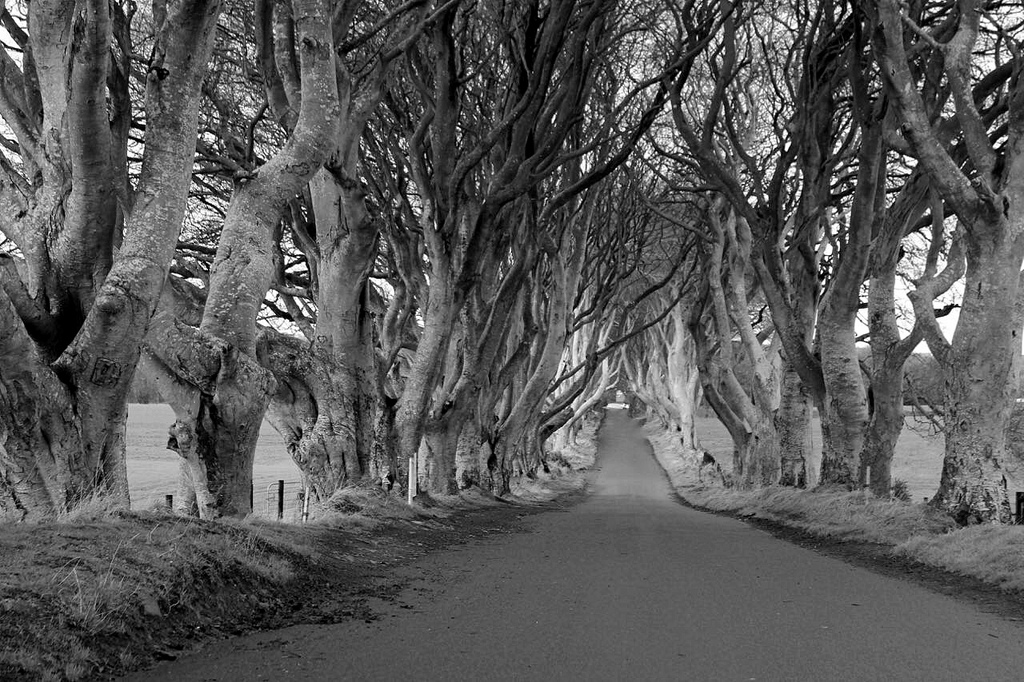 The Dark Hedges | © Subherwal/ Flickr
