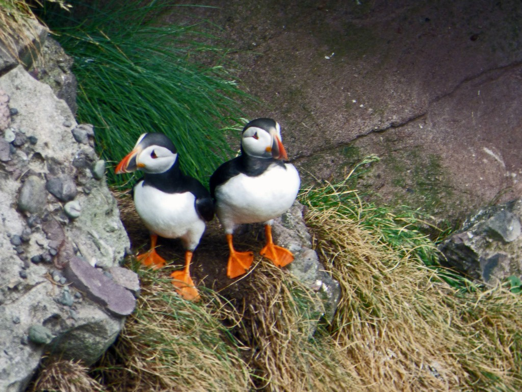 Puffin Pair at Fowlsheugh | © Robert Orr/Flickr