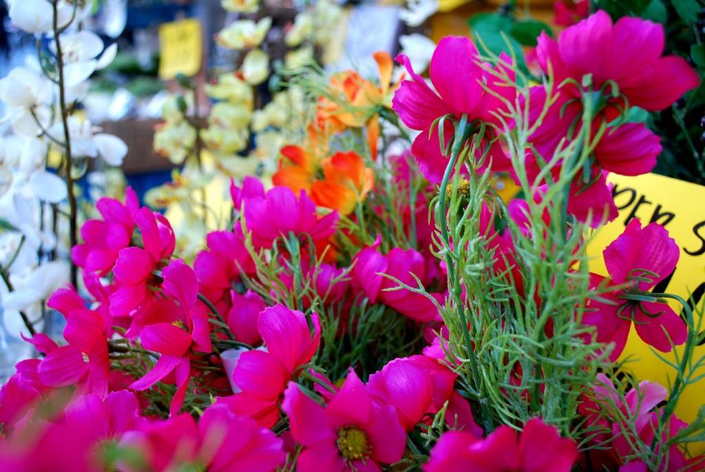 Yangjae Flower Market | © Kevin Gessner / Flickr
