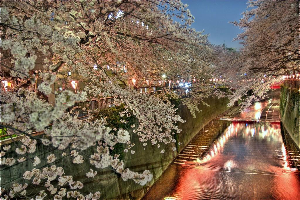 Naka-Meguro spring cherry blossom festival | © SF Brit/Flickr