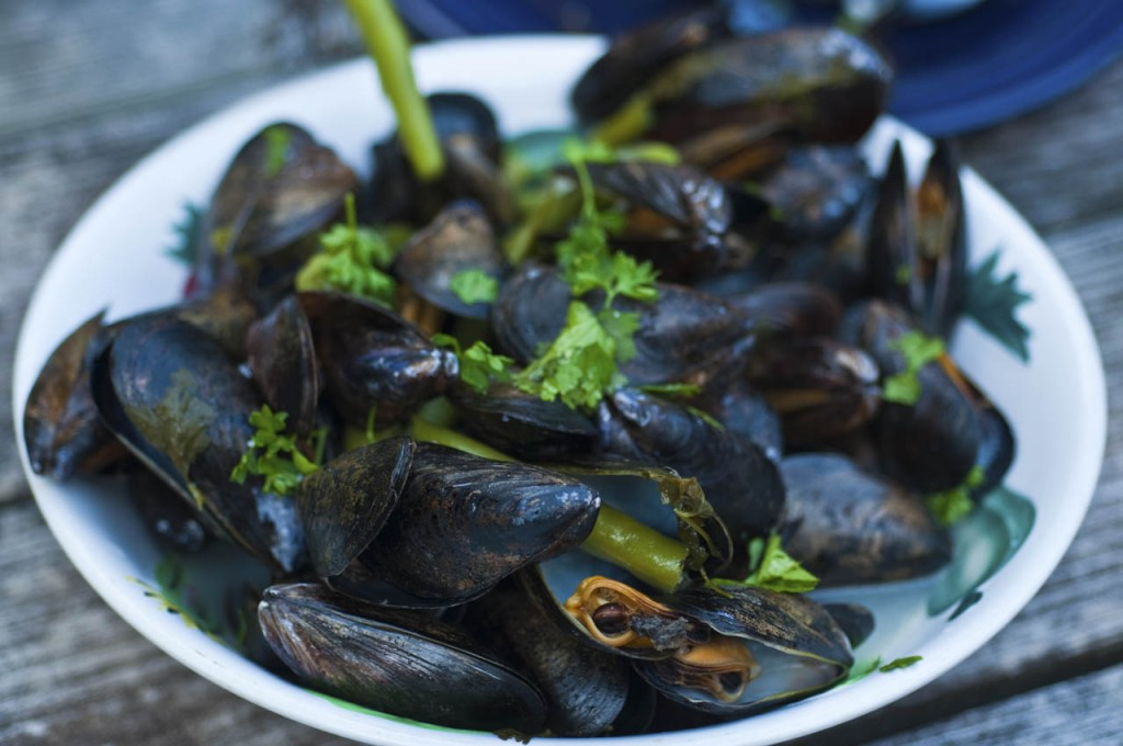 Mussels|© Christopher Mooney/FlickR