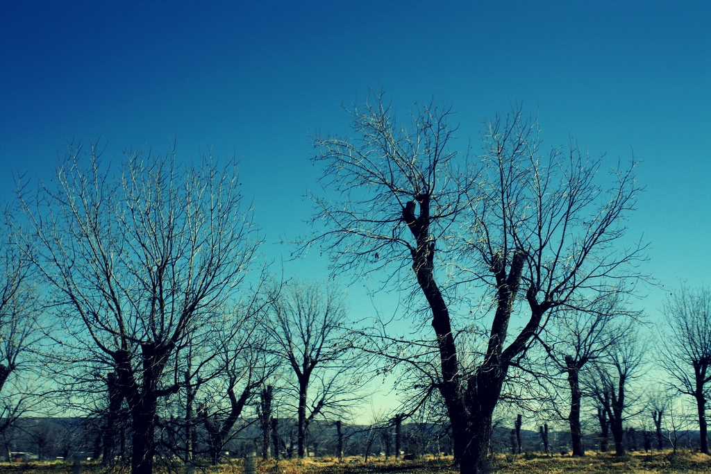 Blue skies in Parras, Coahuila | © Berenice Garcia/Flickr