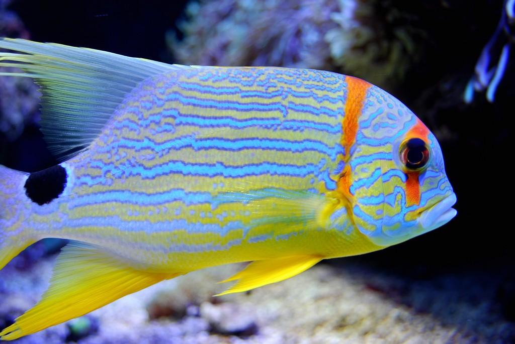 Aquarium at the Oceanographic Museum   © Aanjhan Ranganathan / Flickr