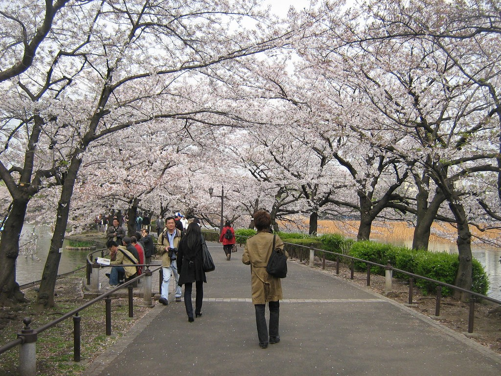 Ueno Park Sakura Festival time | © Gavin Anderson/Flickr