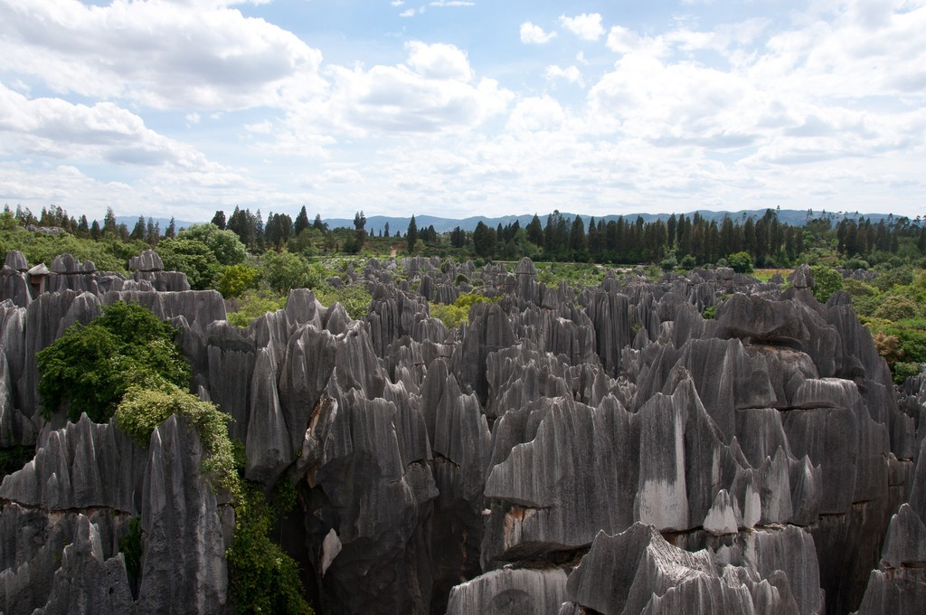 Stone Forest|©Mills Baker/Flickr