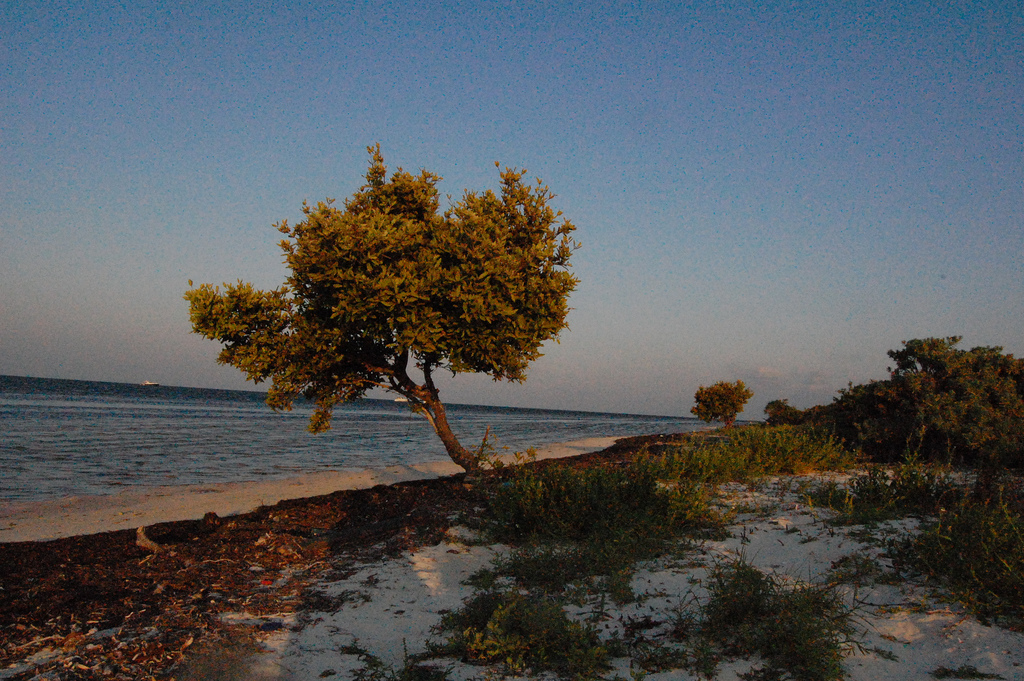Isla Holbox isn't yet as polished as nearby tourist resorts | © Tabi/Flickr