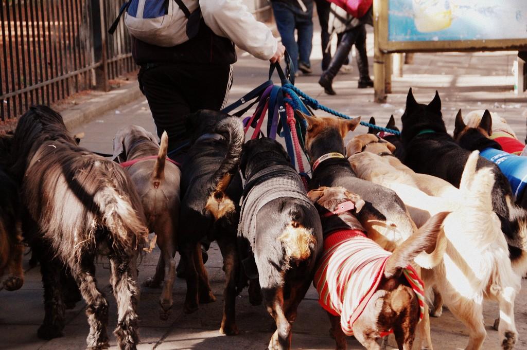 Andador de cães em Buenos Aires | © LWYang / Flickr