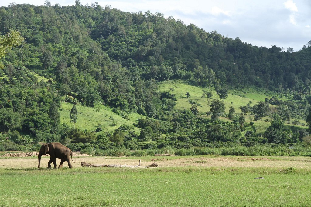 Elephant in open space | © Brian Fagan / Flickr