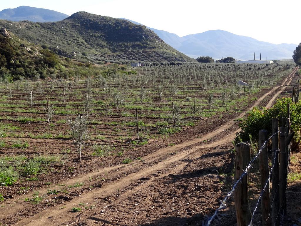 Wine country in the Valle de Guadalupe, Ensenada | © Adam Jones/Flickr