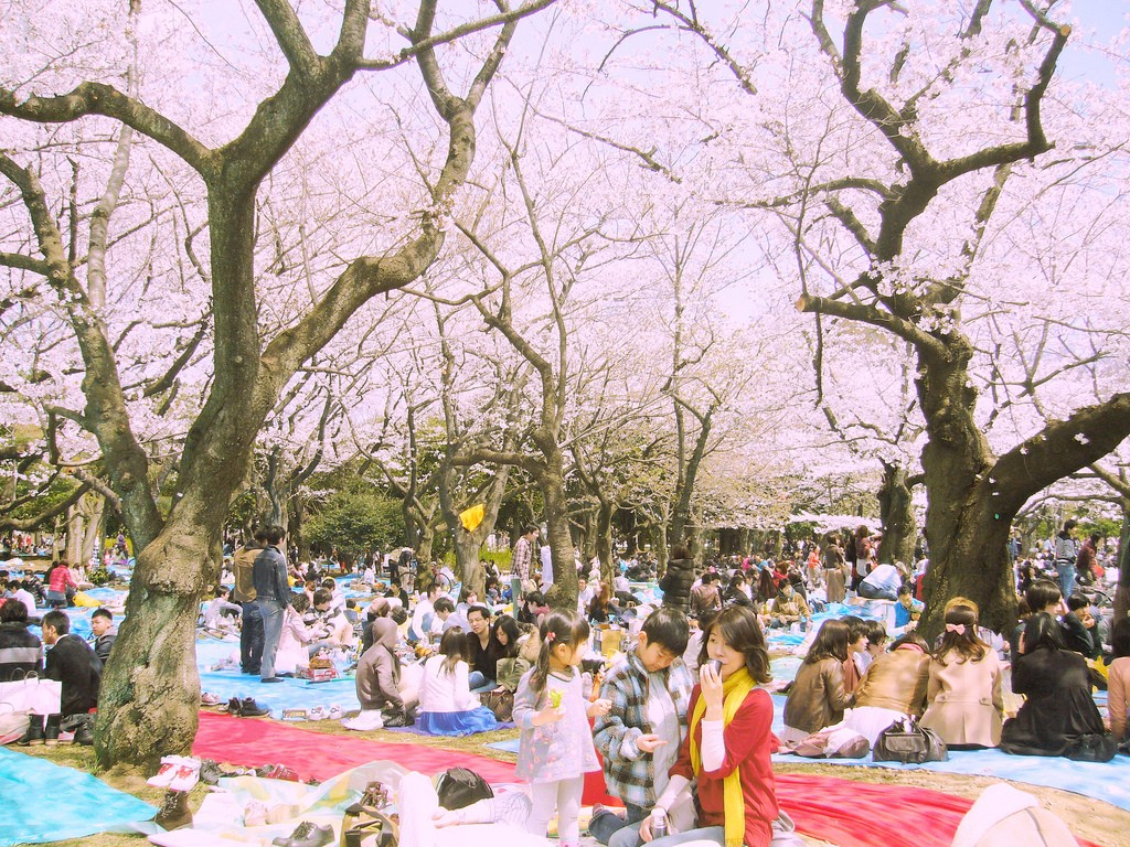 The hanami scene at Yoyogi Park in Tokyo | © Dick Thomas Johnson/Flickr