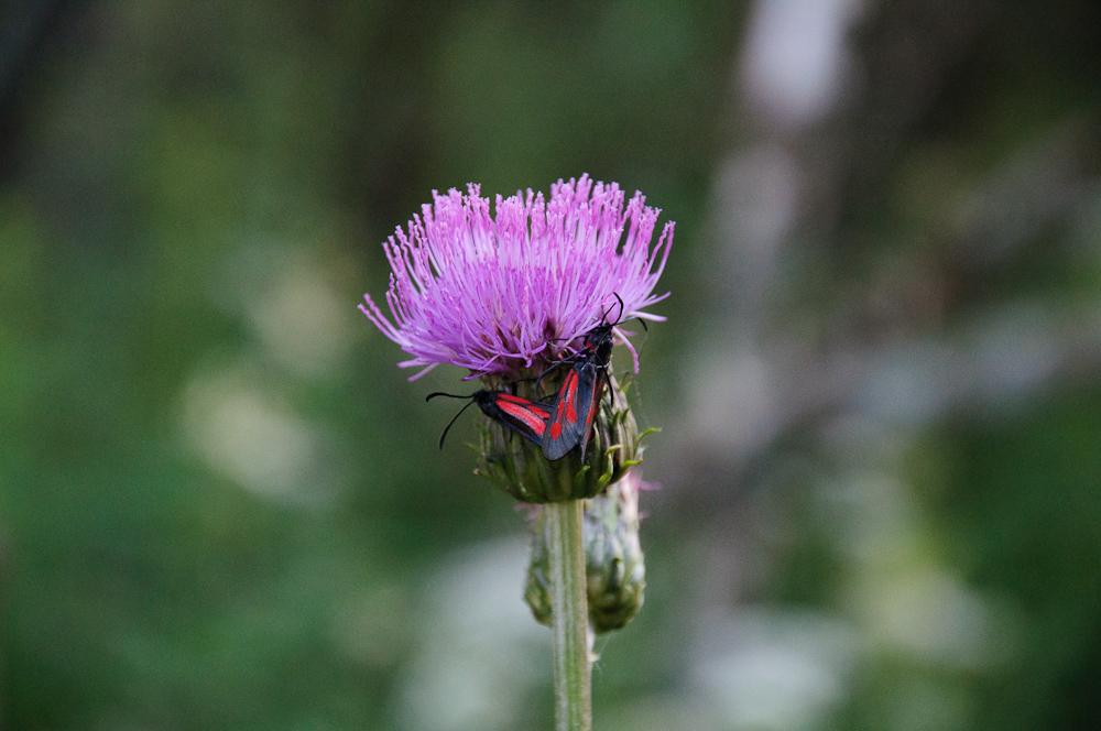 Flora | ©Erik Paakspuu/Flickr