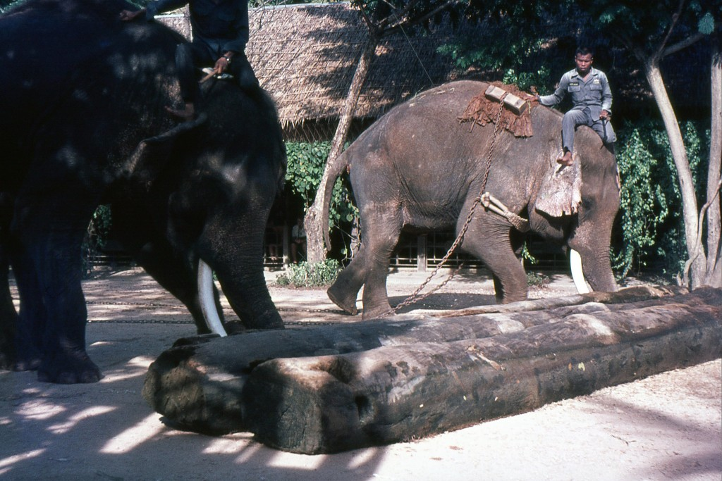 Elephants were key in Thailand's logging industry, c.1969 | © Barry Lewis / Flickr