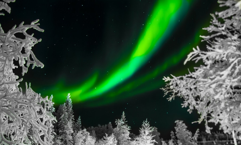 Snow covered trees against the northern lights / Pixabay