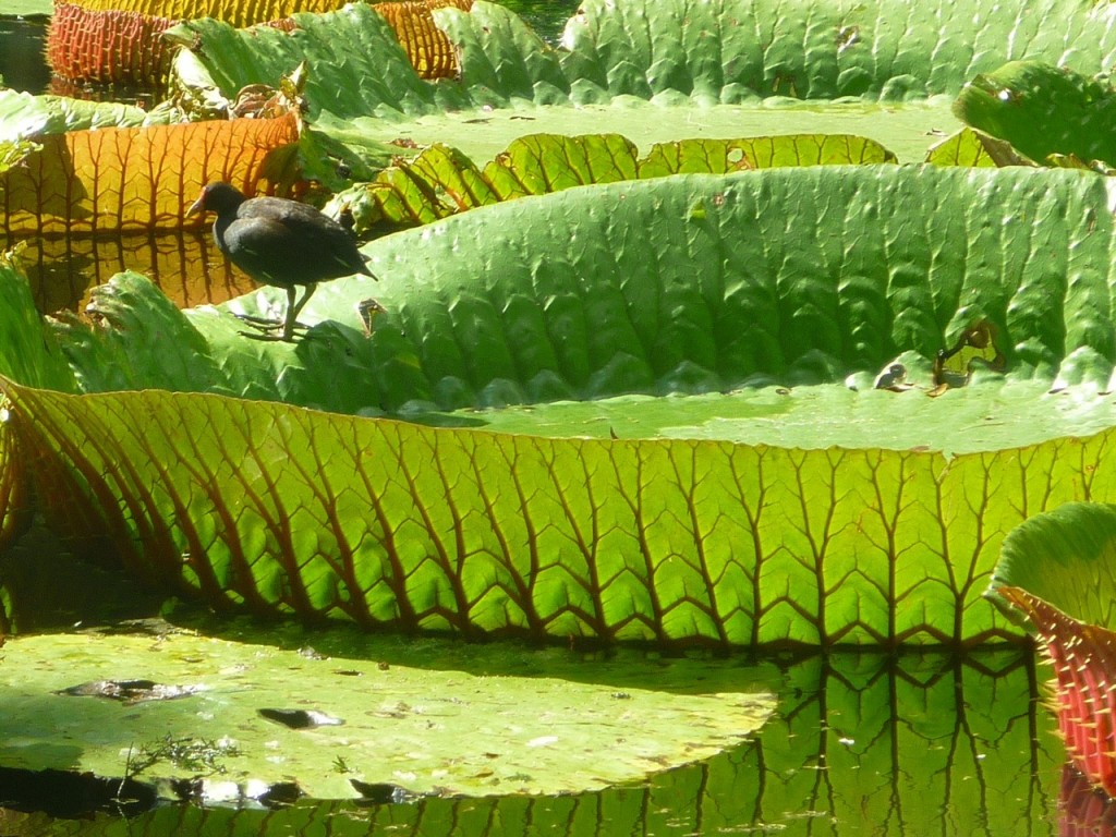 Waterlily|© Courtesy of Mauripix