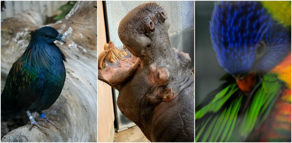 Zoological Gardens   © Gabriella Szekely / Flickr