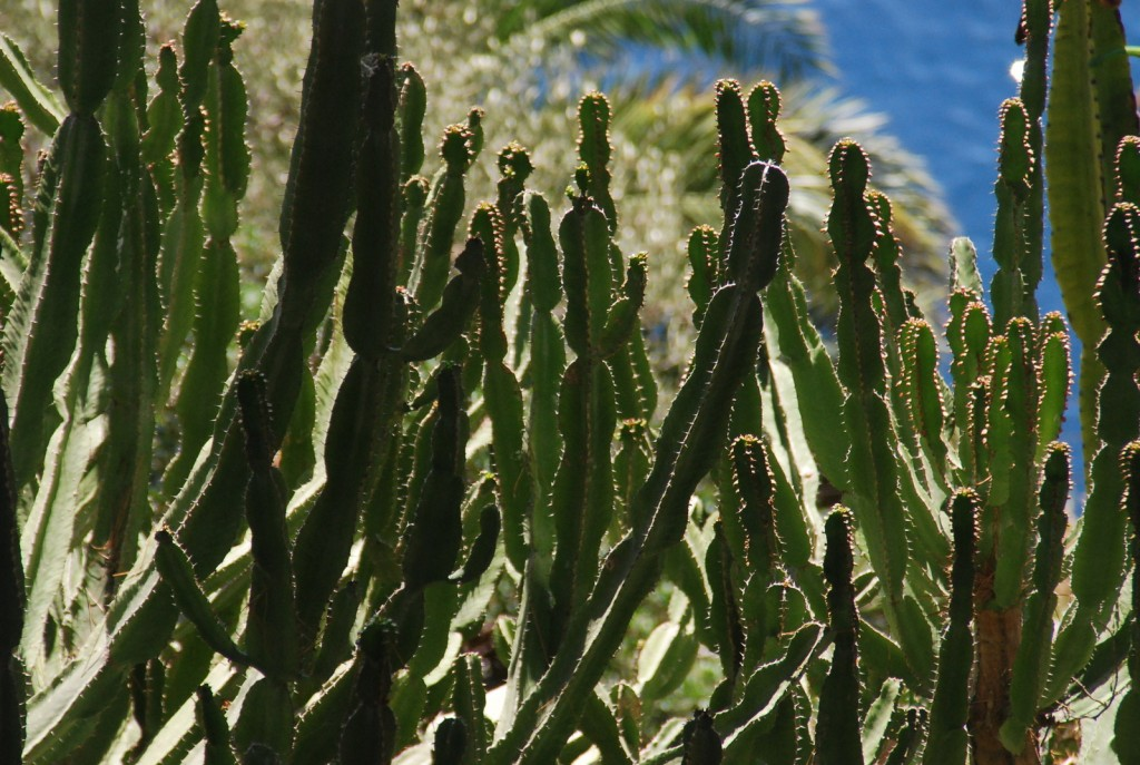 Cactus at the Exotic Garden | © Ahatchoum / Freeimages