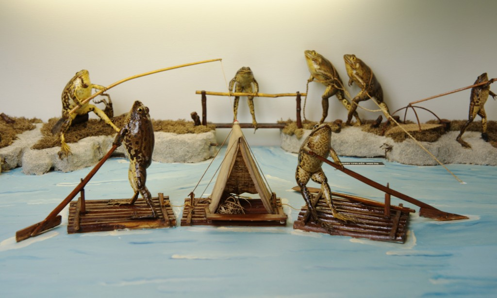 Rowing frogs | © Froggyland