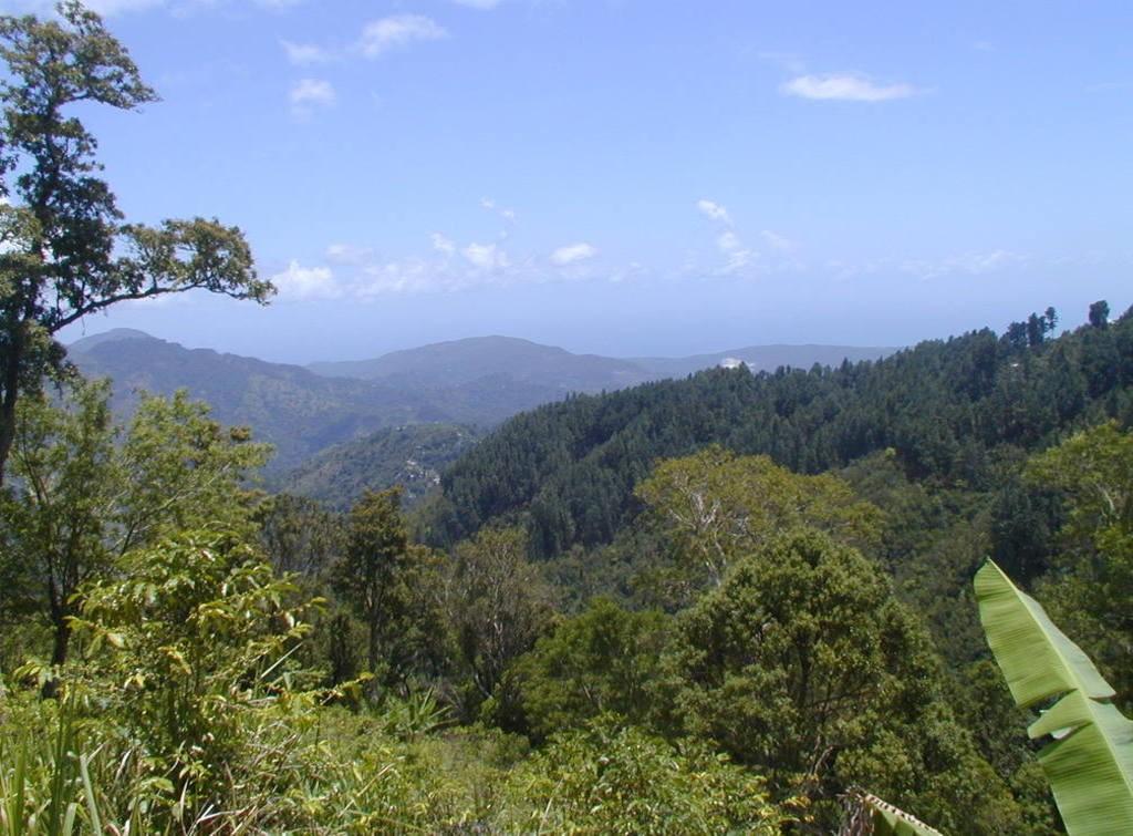 Blue Mountains   Courtesy of Jamaica Tourist Board