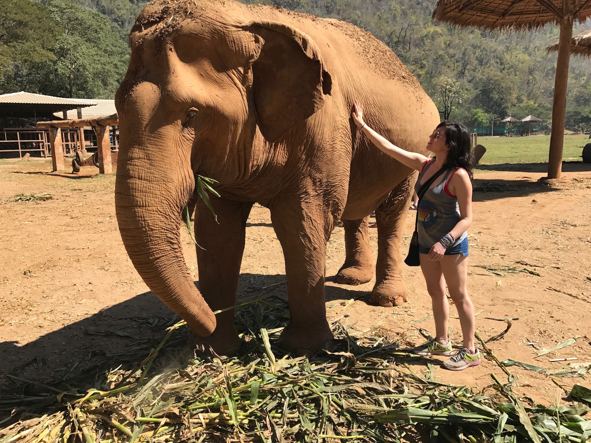 Elephant Nature Park © Nikki Vargas