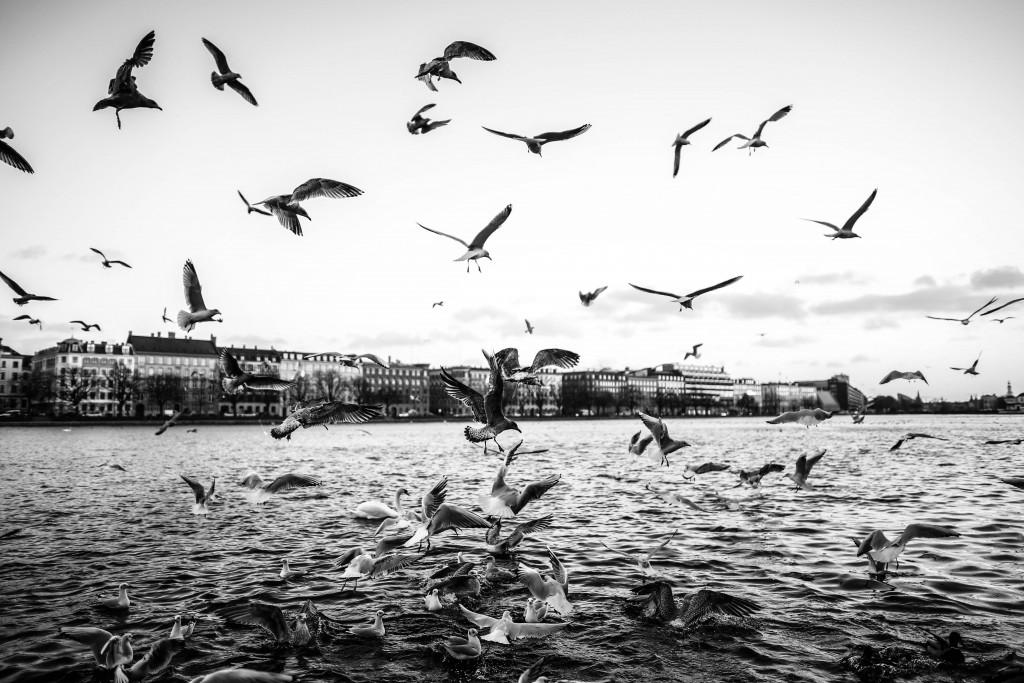 Copenhagen's Nature | © Christian Lykking