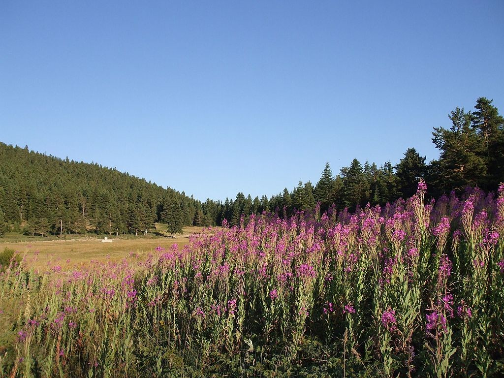 Kızılcahamam, Çukurca Köyü | © Halit Edip Özcan/Wikimedia Commons