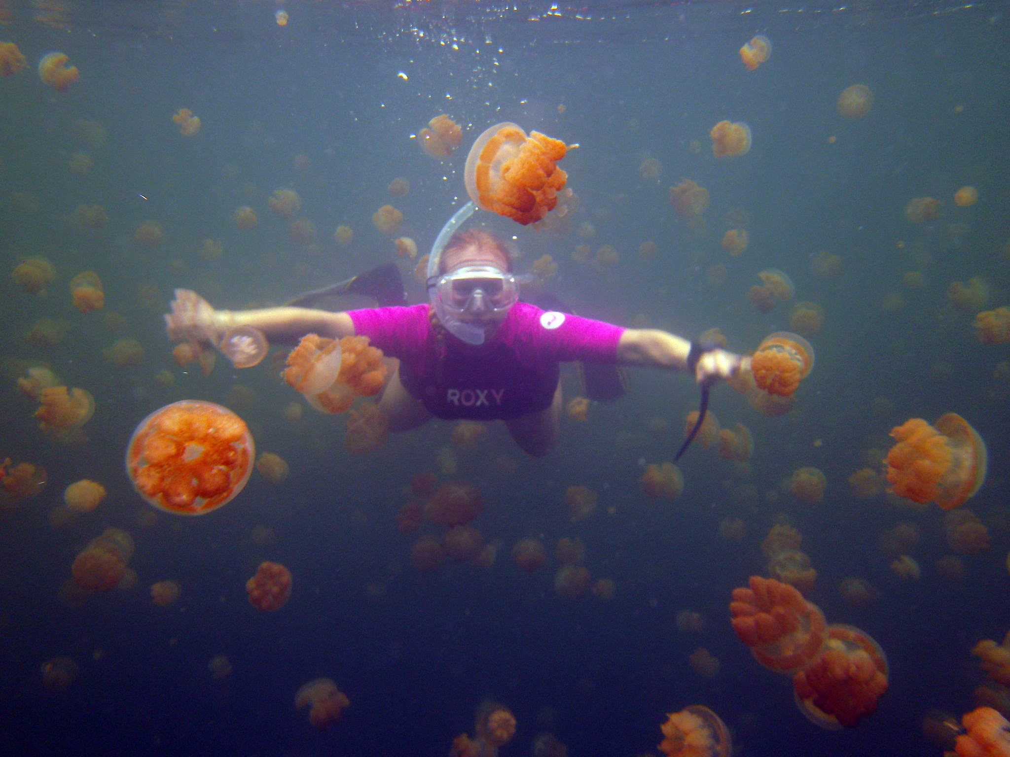 You can swim with millions of stingless jellyfish in this for Can i have a jellyfish as a pet