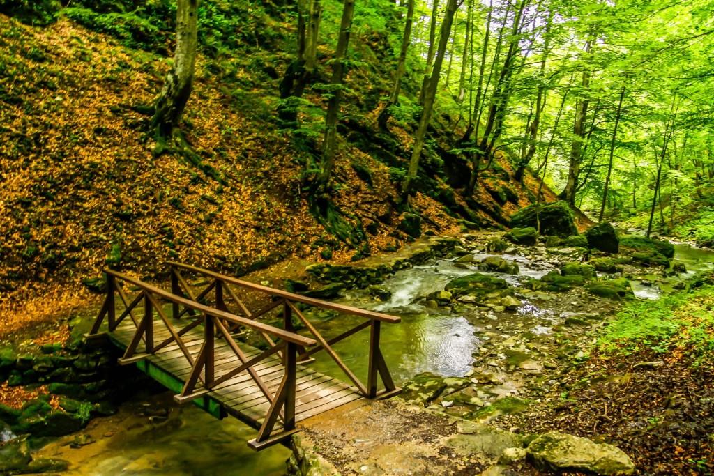 Forest walk in Bulgaria | © Pixabay