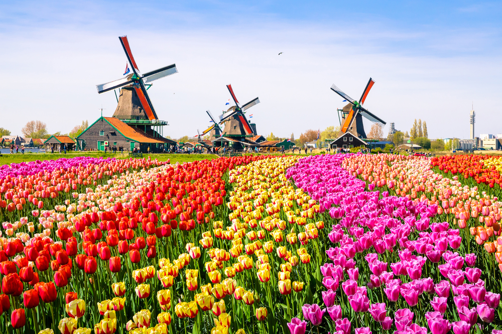 Netherlands Flower Fields | © Olena Z / Shutterstock