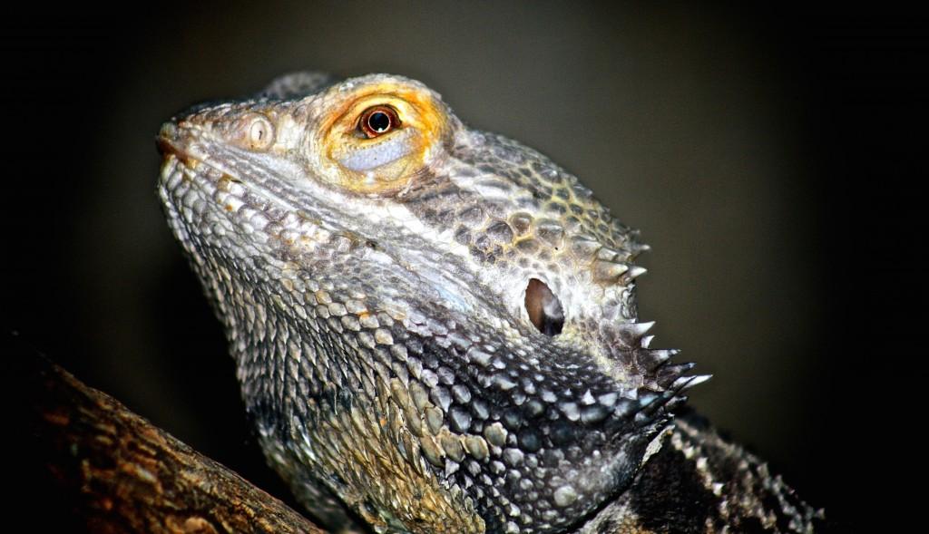 Reptile at São Paulo zoo © Anderson Mancini/Flickr