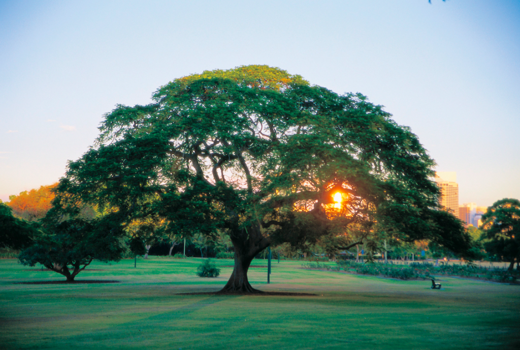 New Farm Park| © Peter Lik/Tourism Queensland
