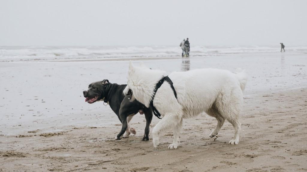 Seaside buddies   © Peterk1997 / Flickr