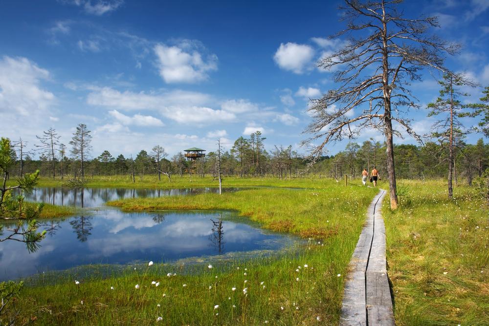 Lahemaa National Park| ©Anna Grigorjeva/Shutterstock