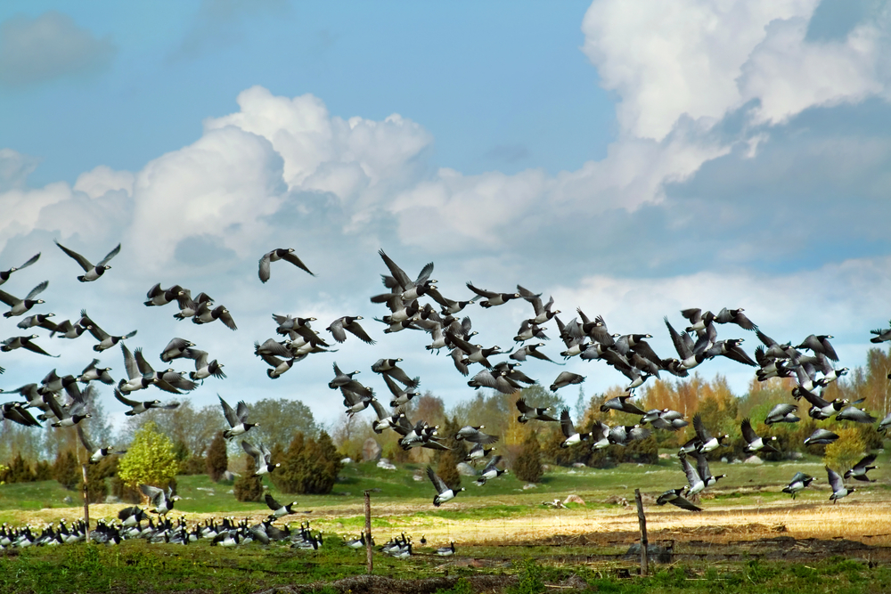 Matsalu National Park | ©Aleksander Kaasik/Shutterstock