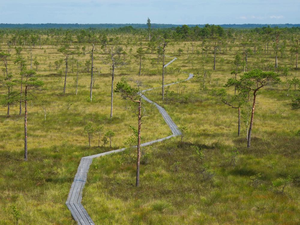Soomaa National Park | ©Peter Grudina/Shutterstock