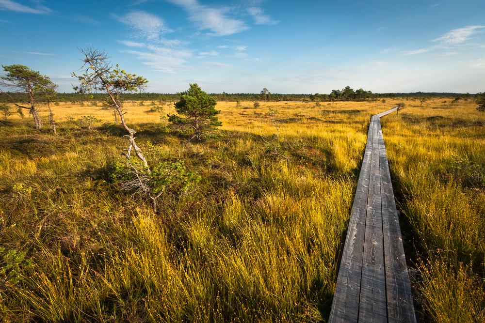 Soomaa National Park | ©Eriks Z/Shutterstock