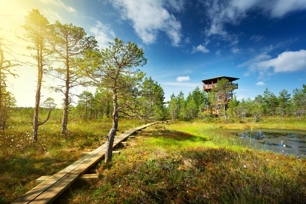Look out at Lahemaa| © Anna Grigorjeva/Shutterstock