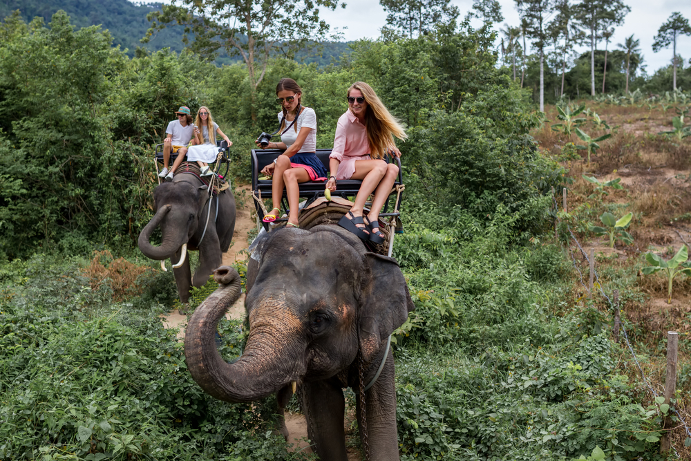 Elephant Riding © Andrey Paltsev/Shutterstock