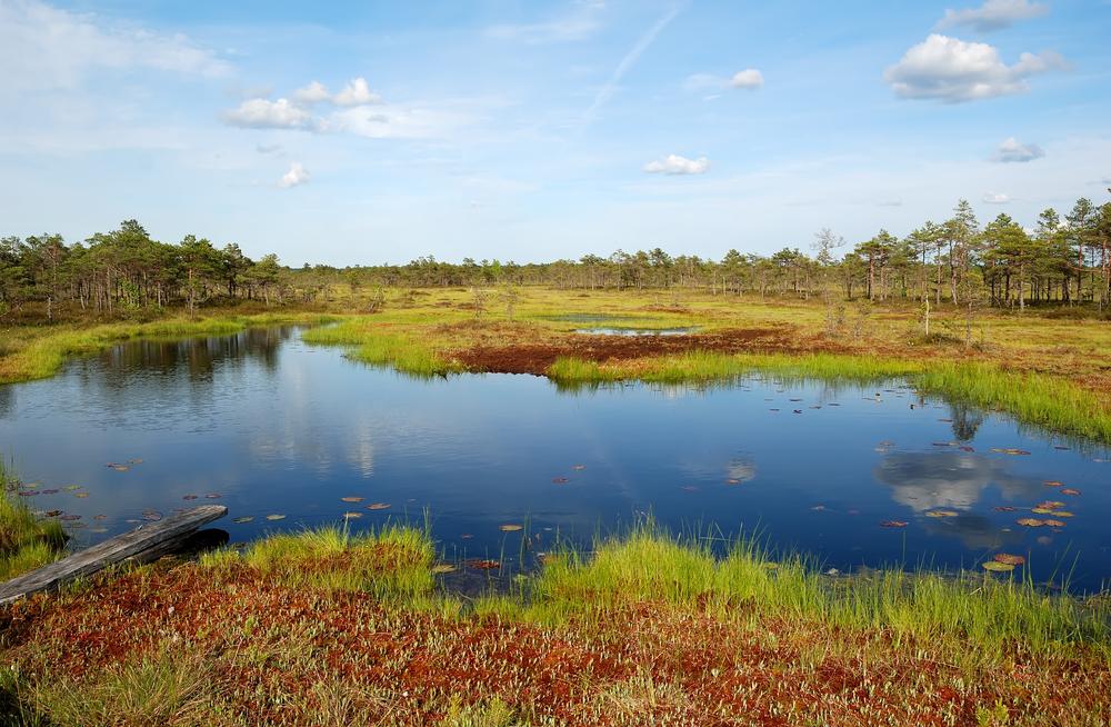 Soomaa National Park| ©kawhia/Shutterstock