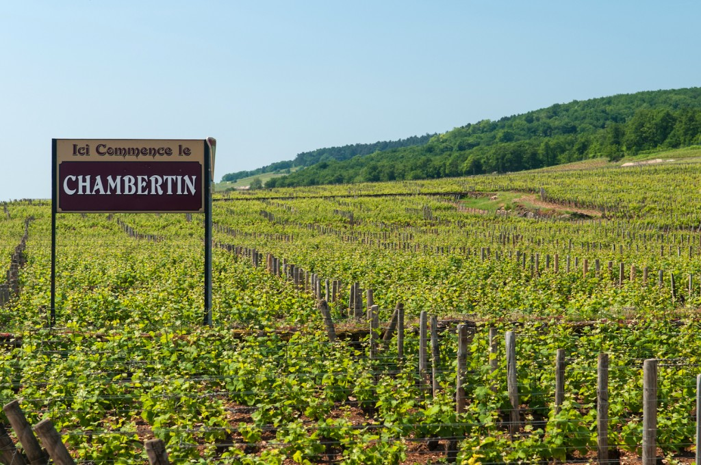 The vines of Chambertin | © Michal Osmenda / Wikicommons