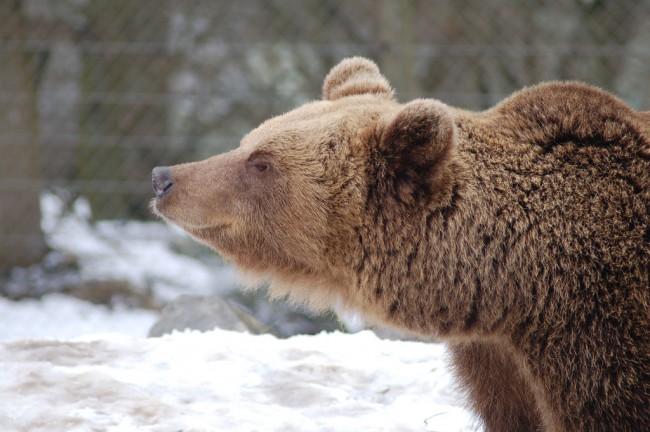 Bears Skansen Stockholm