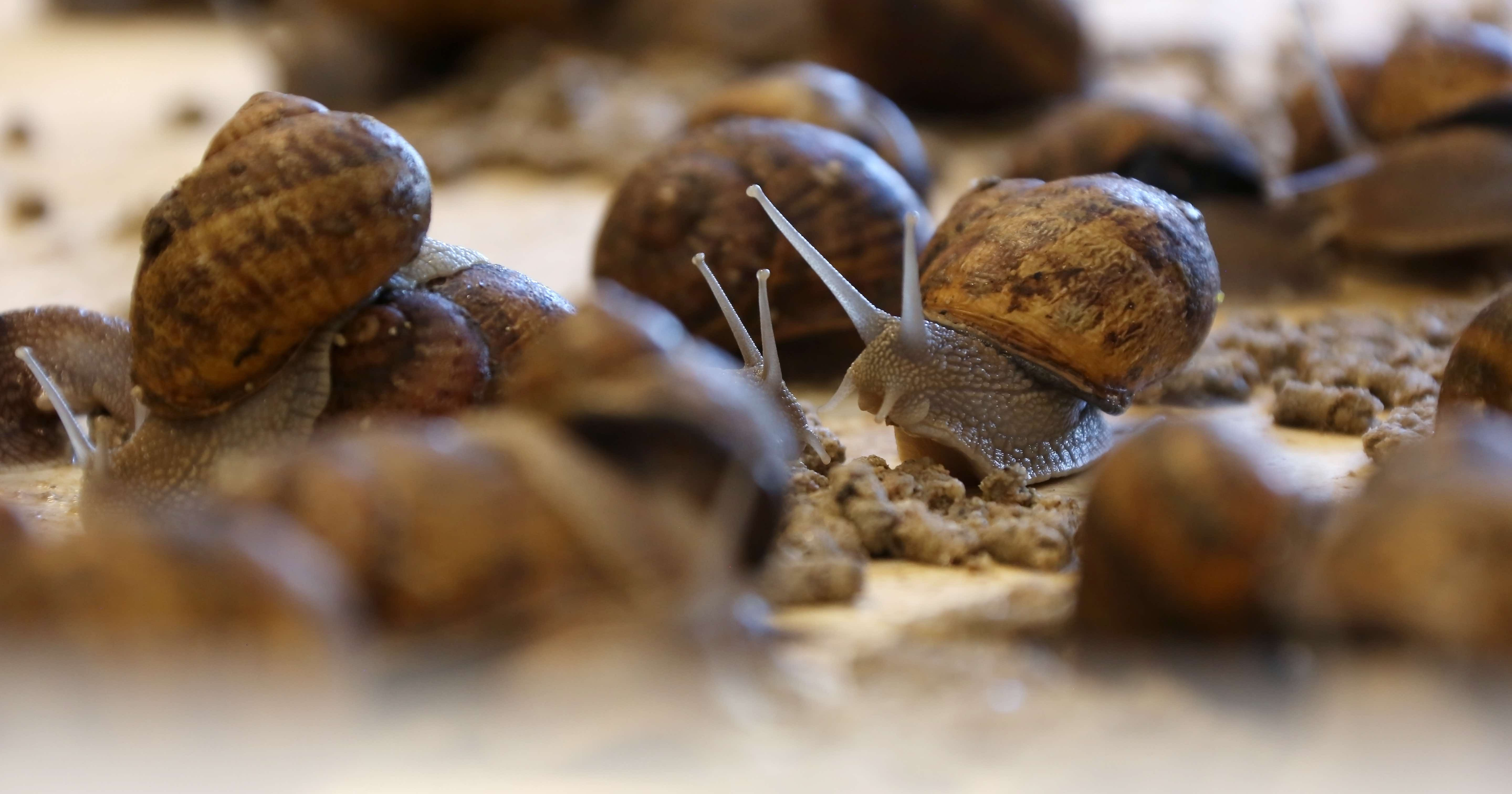 why you should visit a snail farm in belgium u2026 seriously