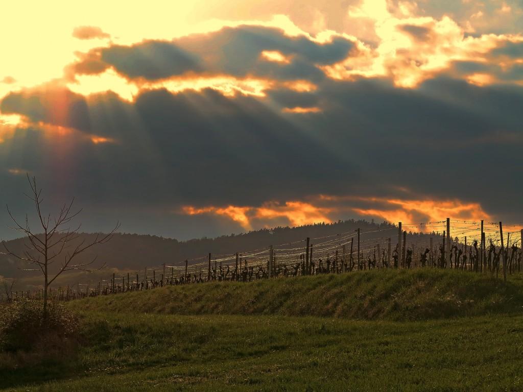 Vineyards |© Pixabay