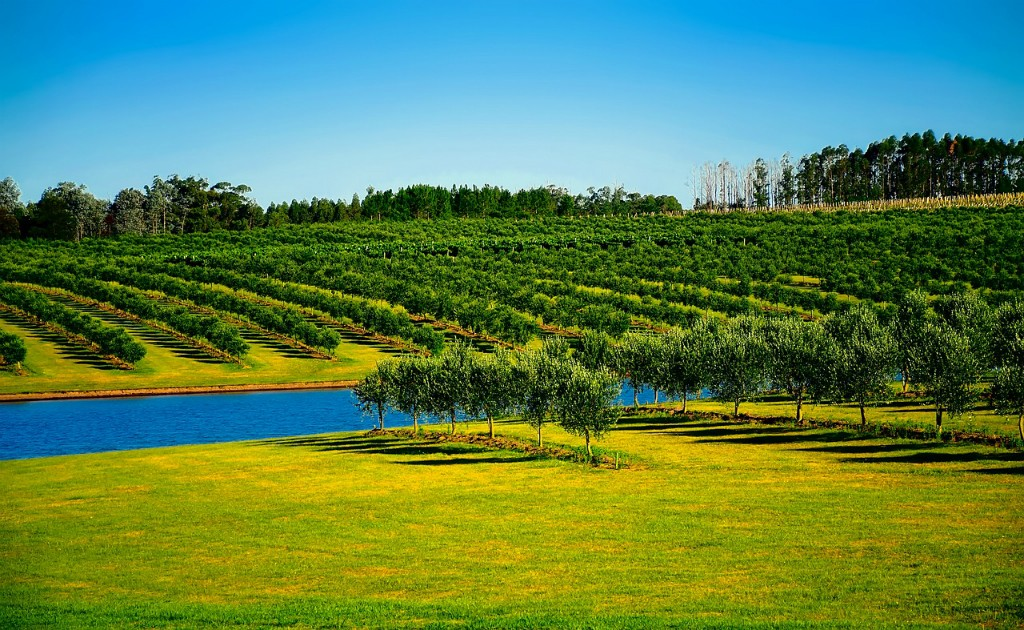 Sustainable planting in Uruguay © David Mark / Pixabay