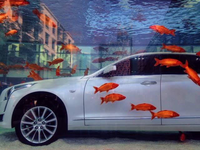 A Car Submerged in a Fish Tank in Xintiandi | ©Rachel Deason