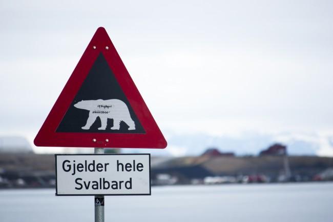 Svalbard polar bear alert © Kitty Terwolbeck / Flickr