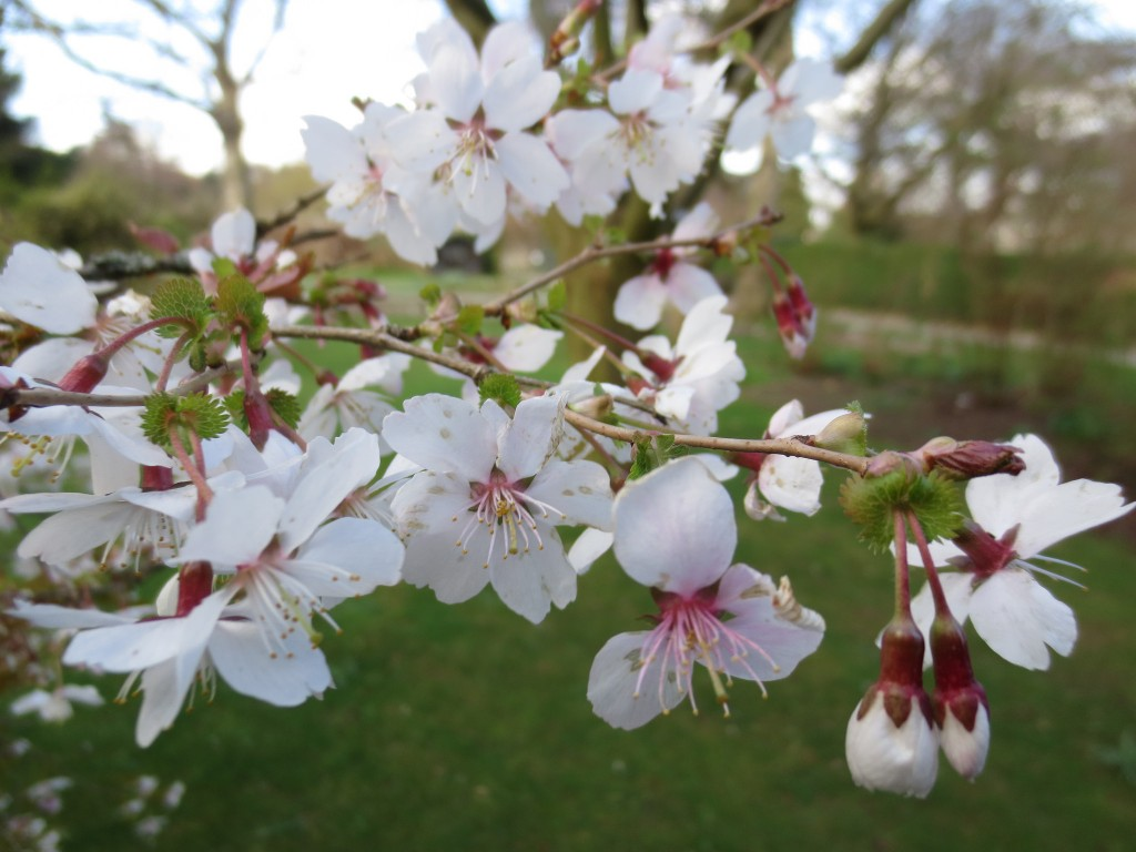 Plum Blossom at Cruickshank | © -epsilon-/Flickr
