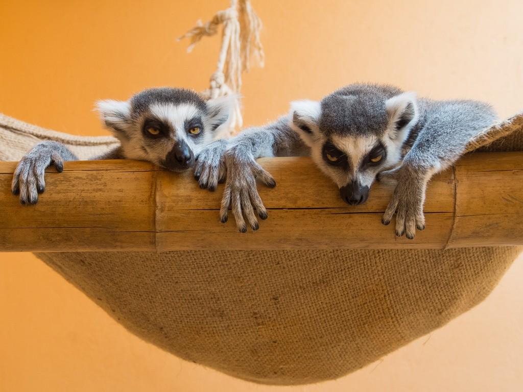 Montpellier Zoo | © Denis Bourez / Flickr